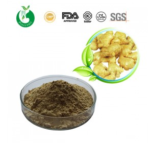 ginger_root_extract_4