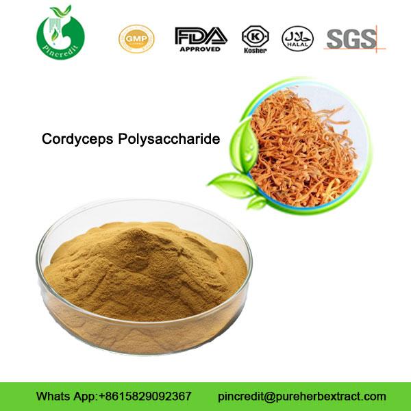 Cordyceps-Polysaccharide