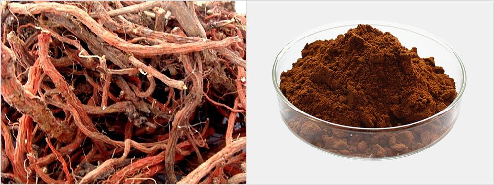 Dan Shen Extract Powder