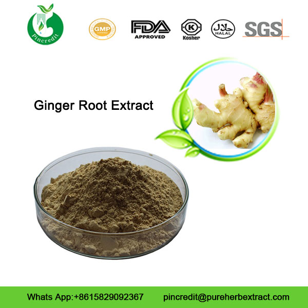 Ginger-Root-Extract