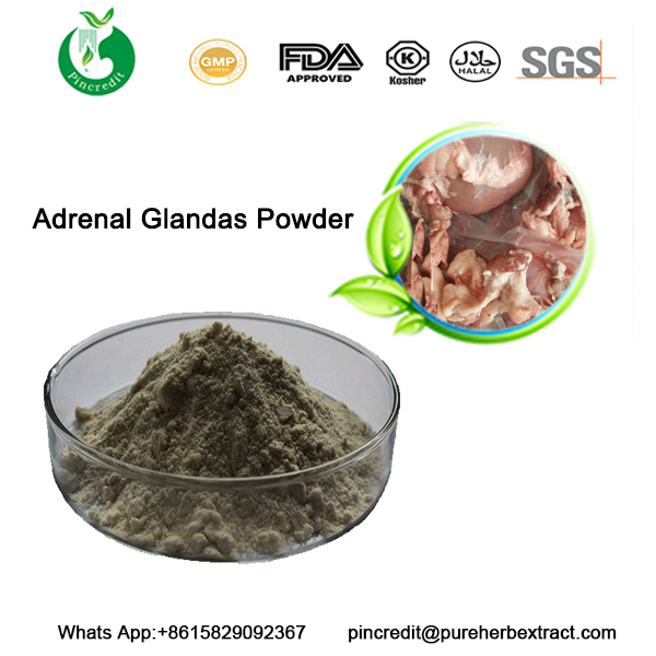 Adrenal Gland Powder