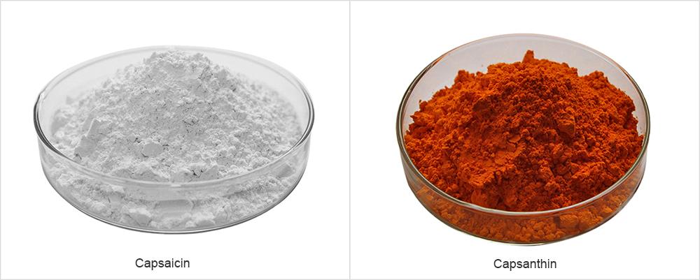 Chilli Pepper Extract Powder