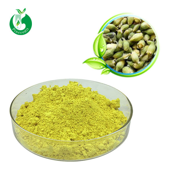 Sophora Japonica Bud Extract Quercetin Powder