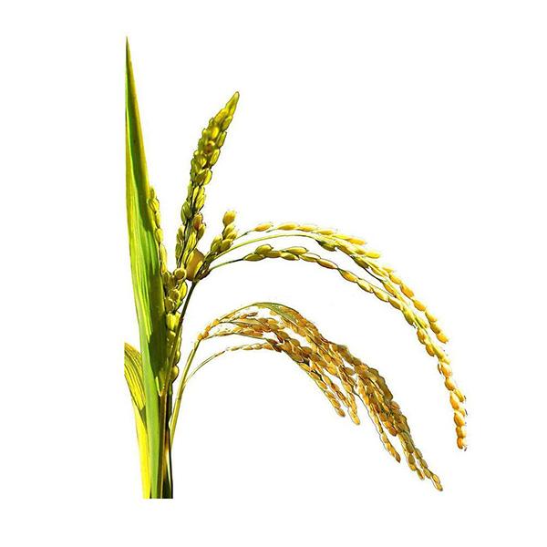 Rice Bran Extract